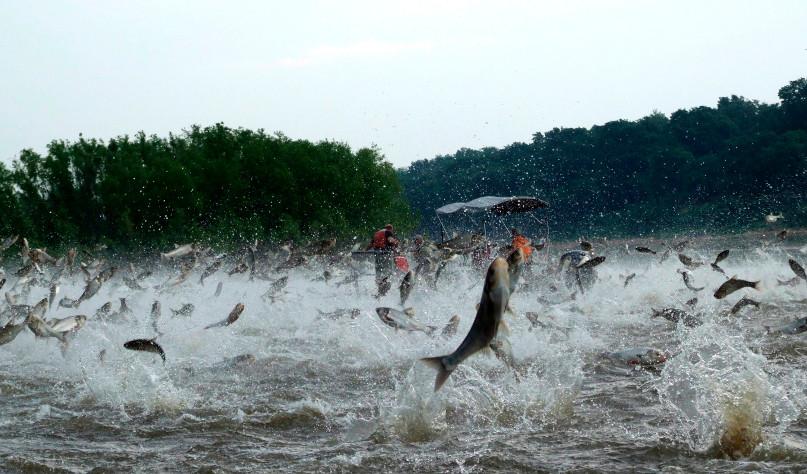 Почему рыба выпрыгивает из воды