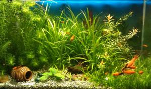 Почему вода в аквариуме мутная после замены