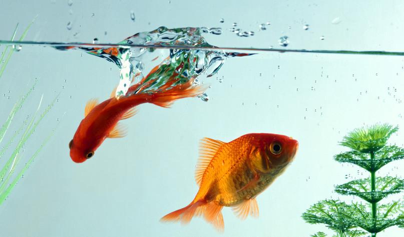 почему появляется пленка на воде в аквариуме