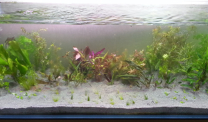 Почему аквариум нельзя заполнять кипяченой водой
