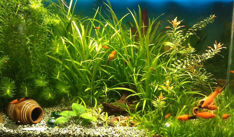 Зачем отстаивать воду для аквариума