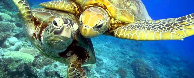 Сколько времени черепахи проводят в воде