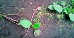 Почему выползают дождевые черви после дождя