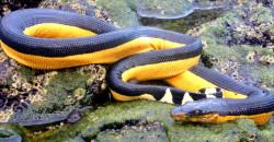 Живут ли змеи в воде