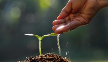Как поливать рассаду