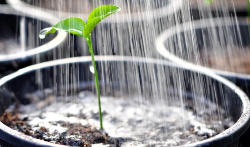 почему растения не рекомендуется поливать холодной водой